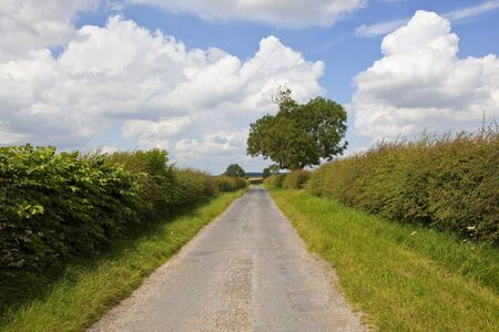 a summer country road with an oak tree through agricultural patchwork fields in the yorkshire wolds under a blue sky with white clouds
