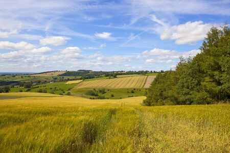 a stunning summer english farming landscape with patchwork fields and golden barley under a blue summer sky in the yorkshire wolds Stock Photo