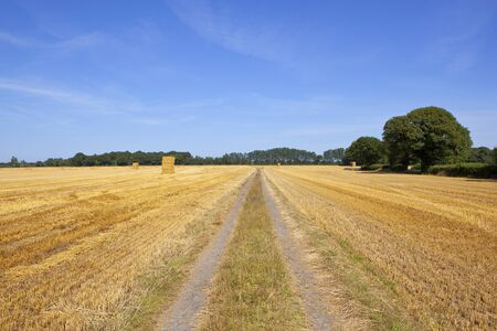 a straight farm track with golden straw stubble field and hay stacks with woodland under a blue summer sky in yorkshire