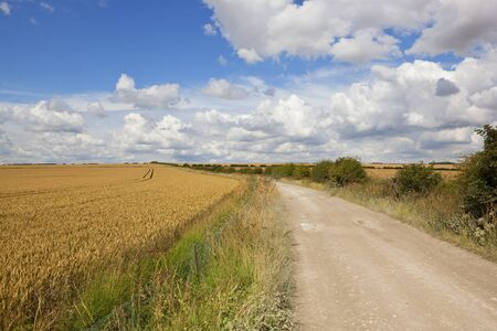 a curving limestone bridleway beside a golden wheat field with hawthorn hedgerow in the yorkshire wolds under a blue summer sky with fluffy white clouds