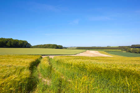 golden green ripening barley fields near woodlands and cultivated soil under a summer blue sky in the yorkshire wolds Stock Photo
