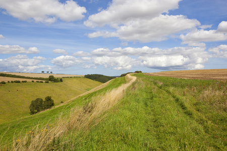 a green summer valley with grazing cattle and dry grasses under a blue summer sky in the yorkshire wolds