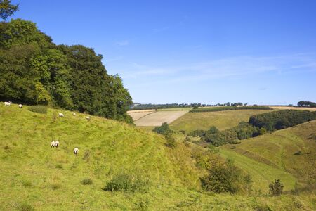 a hillside grazing pasture with sheep and woodland in the yorkshire wolds under a blue summer sky Stock Photo