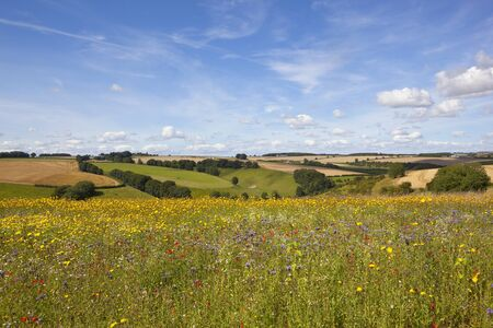 a colorful wildflower meadow overlooking patchwork fields under a blue sky in summer in the yorkshire wolds Stock Photo