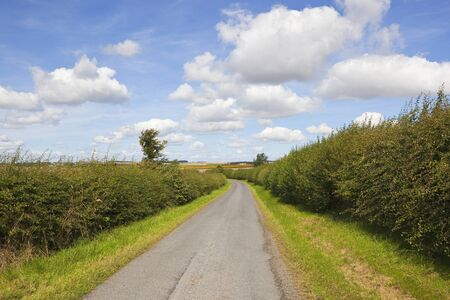 a country road with hawthorn hedgerows on both sides under a blue summer sky in the yorkshire wolds