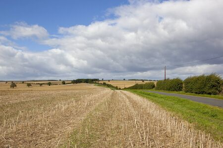 a vast harvested oilseed rape crop near a small country road with hedgerow in an undulating landscape under a blue summer sky in the yorkshire wolds Stock Photo