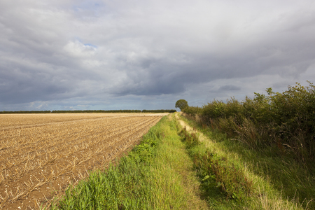 a potato crop in chalky soil beside a grassy bridleway with a hawthorn hedgerow under summer stormy skies in the yorkshire wolds