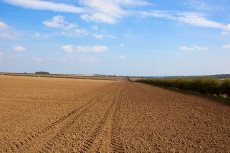 cultivated fields with trees and hedgerows on chalky soil with tyre tracks under a blue cloudy sky in autumn in the yorkshire wolds
