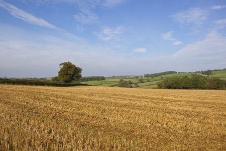 scenic grazing meadows with hedgerows and a golden harvested field in autumn with a blue sky in the yorkshire wolds Stock Photo