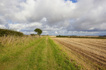 a section of the scenic minster way bridleway with harvested fields and a hawthorn hedgerow under a blue cloudy autumn sky in the yorkshire wolds
