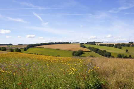 a colorful wildflower meadow in scenic arable land under a blue summer sky in the yorkshire wolds