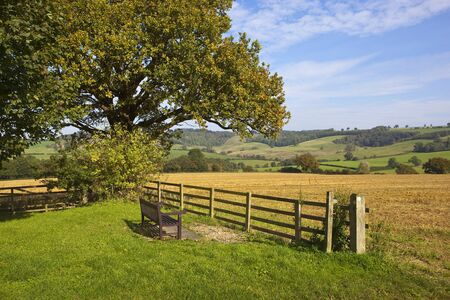 a wooden viewing seat beside an oak tree and fence looking over patchwork agricultural fields under a blue sky in autumn in the yorkshire wolds