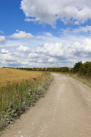 a scenic curving bridleway with wheat fields and hedgerows under a blue cloudy summer sky in the yorkshire wolds Stock Photo