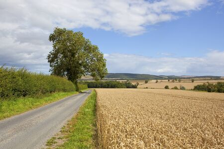 a small country road with scenery in the yorkshire wolds near a ripe wheat fieldl and hedgerows under a blue cloudy sky in autumn Stock Photo