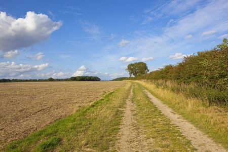 a yorkshire wolds farm track near a harvested field and hawthorn hedgerow with woodland and an ash tree under a blue summer sky Stock Photo