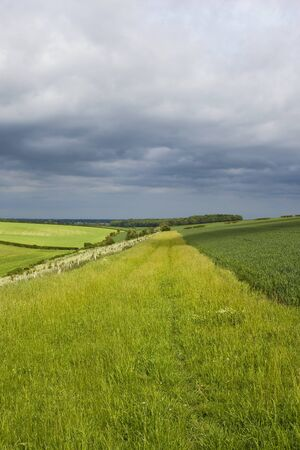 hillside wheat field and valley with woodland and hedgerows under a summer stormy sky in the yorkshire wolds