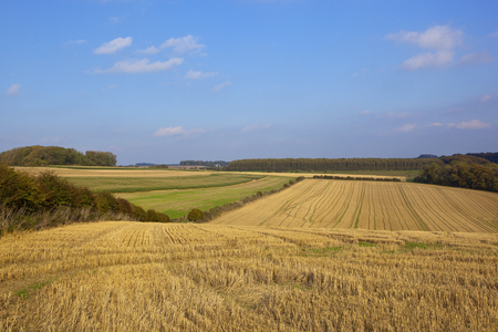 yorkshire wolds farmland on a shooting estate with woodland harvested fields and pheasant cover under a blue sky in autumn