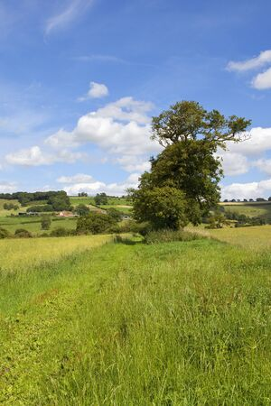 an old oak tree in scenic agricultural farmland with woodland and hedgerows under a blue summer sky in the yorkshire wolds