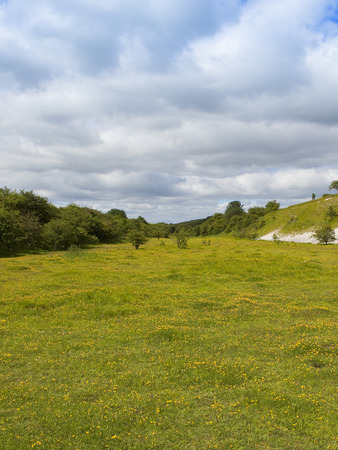 a yorkshire wolds nature reserve in an old quarry with trees shrubs and wildflowers under a summer cloudy sky Stock Photo