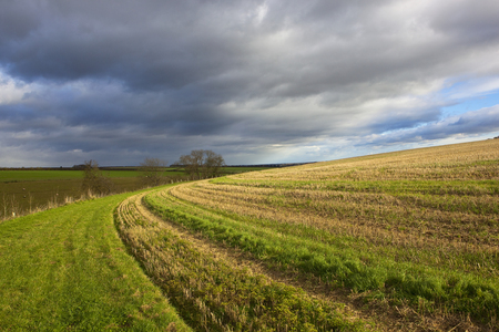a curving grassy track around a wheat stubble field on a hillside under a stormy sky in the yorkshire wolds Stock Photo
