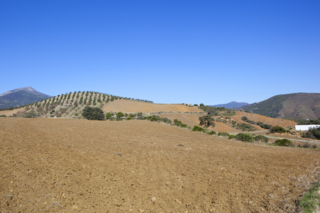 undulating plowed arable land in andalucia spain with olive trees and mountains under a blue sky