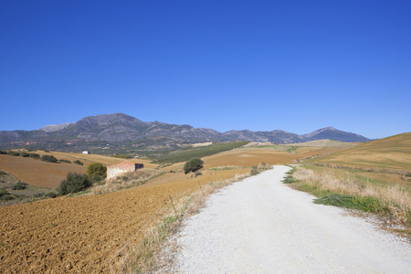 an andalucian agricultural landscape with plowed soil and olive groves near mountain scenery under a blue sky in spain