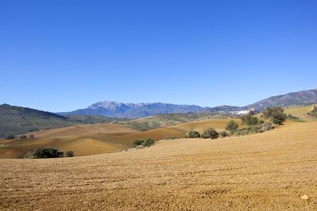 undulating plowed fields with mountain scenery and olive groves in andalucia spain under a clear blue sky