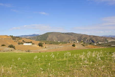 andalucian farmland with plowed undulating fields olive groves dry grasses and mountain scenery under a blue sky