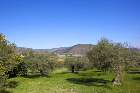 olive production in andalucia spain with arid scenery farms and mountains under a blue sky