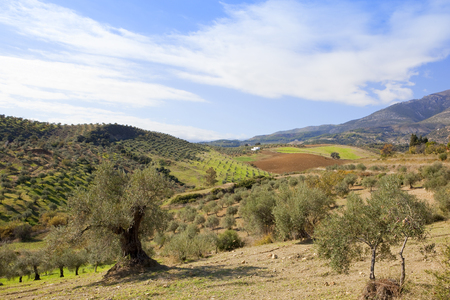 scenic farmland with mountais and olive groves under a blue cloudy sky in andalucia spain