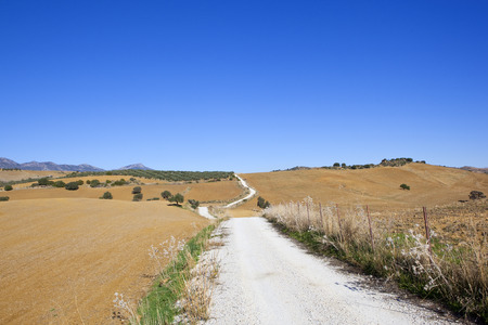a white winding road with olive groves dry grasses and mountains in scenic andalucia spain under a clear blue sky