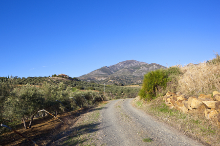 a stony track near olive groves with palms and a wall looking towards mountain scenery under a clear blue sky in andalusia
