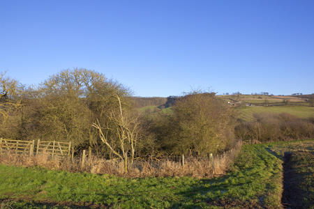 winter sunshine in the yorkshire wolds with woodland and hedgerows in hillside farmland under a clear blue sky