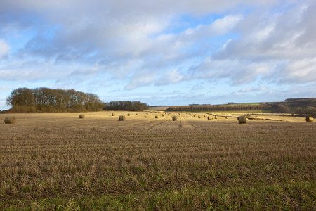 extensive straw stubble fields with round bales and woodland under a blue cloudy sky in the yorkshire wolds in winter Stock Photo