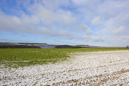 An oilseed rape crop on a hilltop with a light covering of snow near a scenic wooded valley in the Yorkshire wolds under a blue cloudy sky in winter