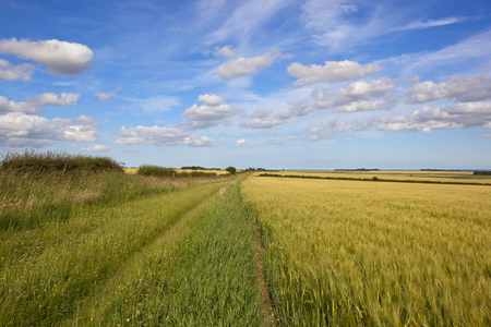grassy section of the minster way bridleway with golden barley fields and hawthorn hedgerows under a summer blue sky in the yorkshire wolds Reklamní fotografie
