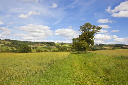 a green oat field surrounded by picturesque hills and woodland with farms and meadows under a summer blue sky in the yorkshire wolds Reklamní fotografie