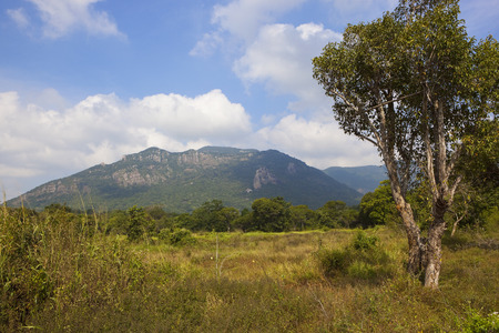 sri lankan landscape at ritigala national park on the site of an old monastry with wooded mountains under a blue sky with fluffy white clouds Reklamní fotografie