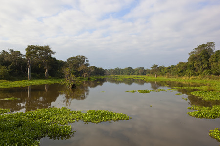 sri lankan lily lake with reflections at wasgamuwa national park with tropical forest lotus and water hyacinth under a blue cloudy sky