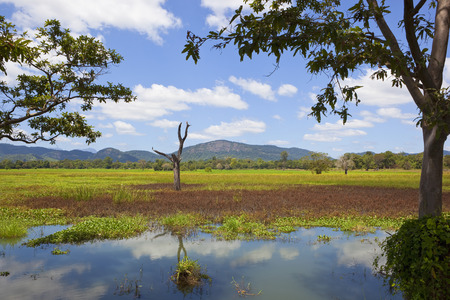 sri lanka landscape with forested mountains and a dead tree viewed across a marsh at wasgamuwa