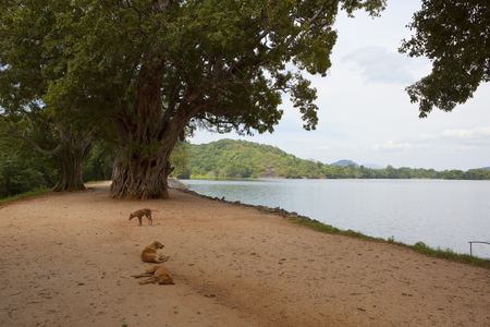 sri lanka landscape with dogs resting on the sand by scenic sorabora lake