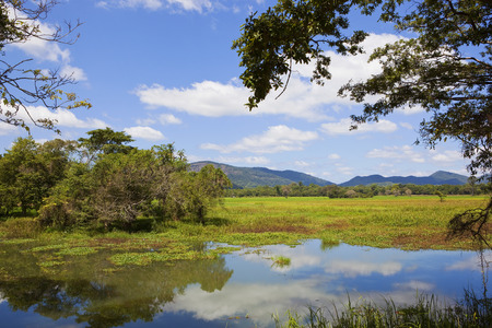 sri lankan landscape and lake at wasgamuwa national park with trees lotus woodland and mountains under a blue sky