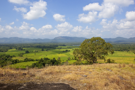 sri lankan rural countryside with woodland lakes and rice paddies viewed from a volcanic rock formation in wasgamuwa national park under a blue sky with fluffy white clouds