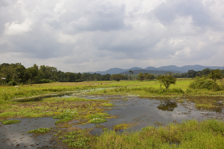 A Sri Lankan mirror lake with lotus and hyacinth near woodland and mountains in wasgamuwa national park under a cloudy sky