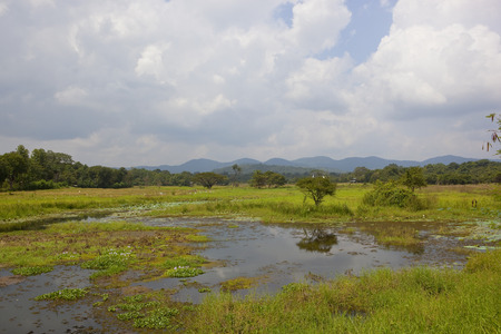 lake and woodland with mountains in the beautiful wasgamuwa national park with water hyacinth and lotus under a blue cloudy sky in sri lanka