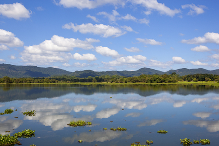 mirror lake with lotus and water hyacinth fringed by woodland and mountains in wasgamuwa national park in sri lanka
