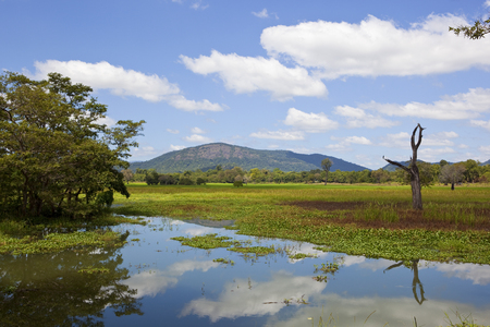 lakeland and mountain scenery in the national park of wasgamuwa in sri lanka with a dead tree by a lake under a blue sky Reklamní fotografie