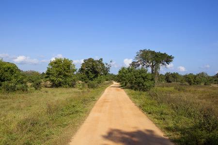 game drive tracks in wasgamuwa national park with trees and wild grasses under a blue cloudy sky in sri lanka Reklamní fotografie