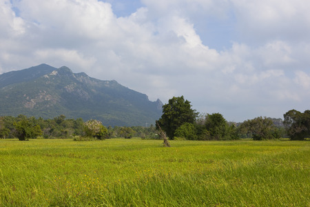 rice paddies and scenic mountains with trees and tropical forest under a blue cloudy sky near ritigala sri lanka