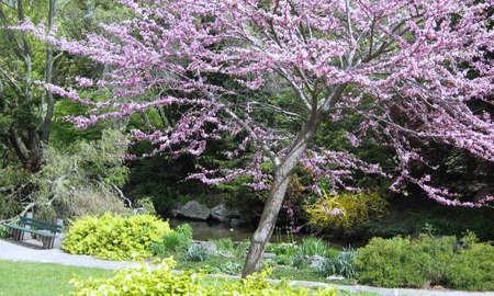Flowering trees in High Park,Toronto